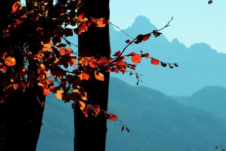 La magia dell'autunno nelle Dolomiti Agordine